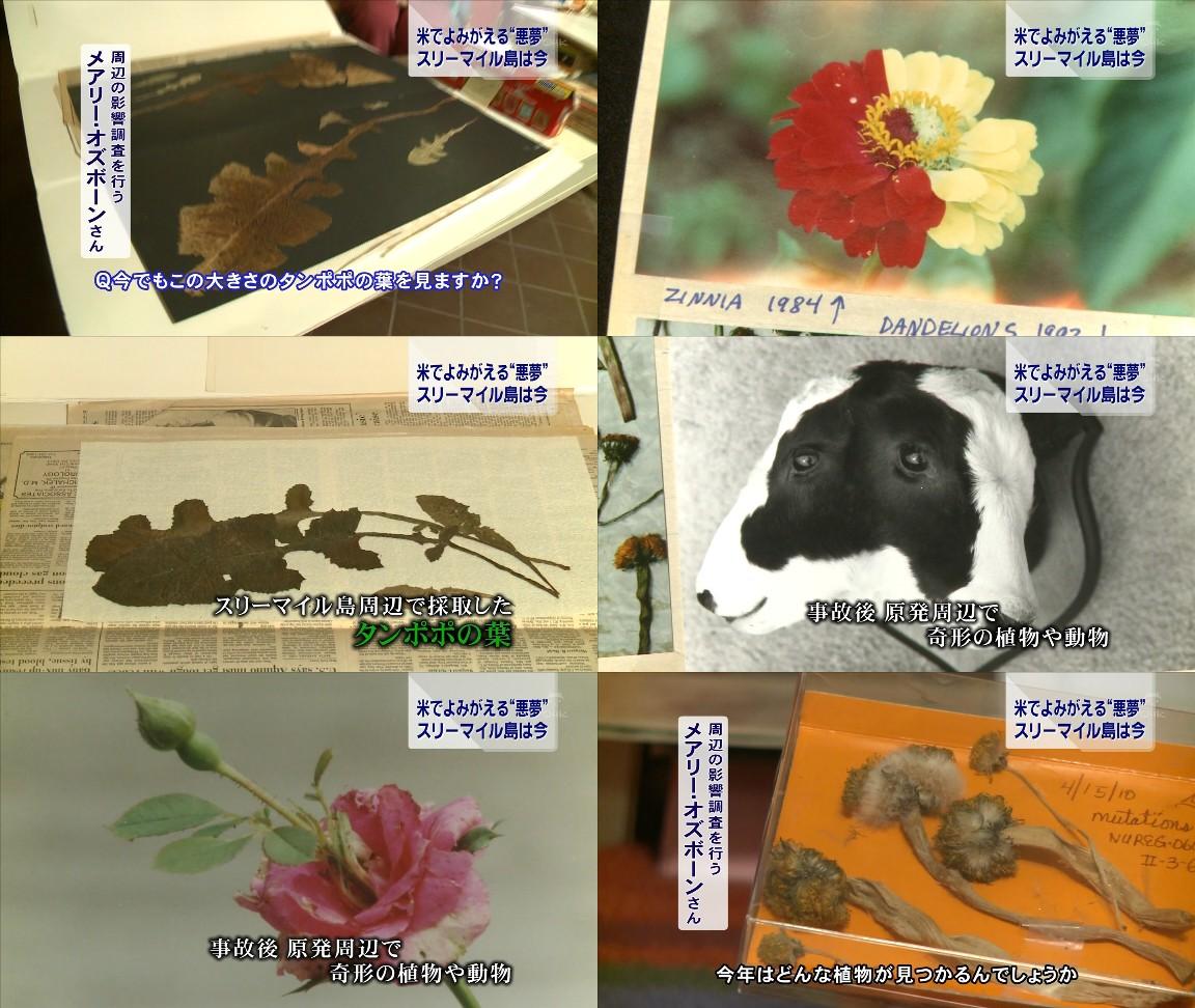 http://vektavekta.blog.so-net.ne.jp/_images/blog/_703/vektavekta/E382B9E383AAE383BCE3839EE382A4E383ABE5B3B6E591A8E8BEBAE381AEE58B95E6A48DE789A9.jpg